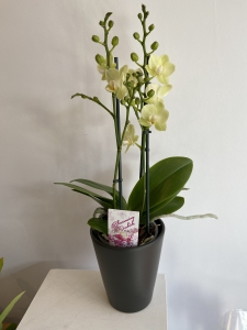 Orchid Plant And Pot