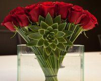 Fan Of Roses