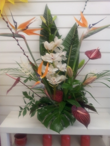 Tropical Arrangment