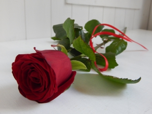 Single Red Or White Rose
