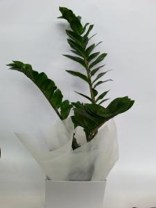 Gift Boxed Zanzibar Gem
