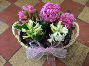 Hyacinth Basket