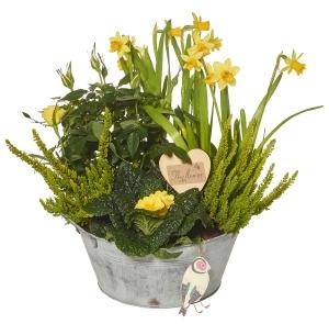 Planted Bowl Arrangement