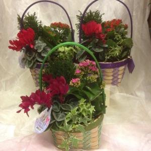 Pretty Planted Basket Arr