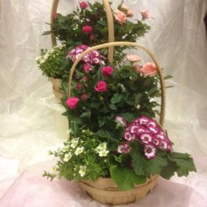 Luxury Planted Basket