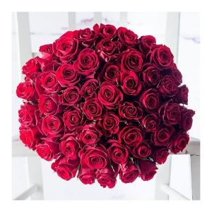 Spectacular 50 Rose