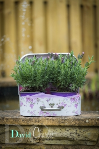 The Country Planter