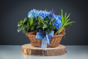 A Planted Basket