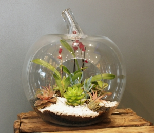 Apple/ Pear Terrarium
