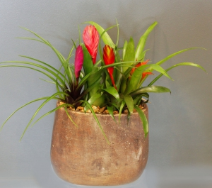 Exotic Bromelia