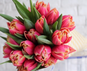 Gorgeous Tulips In A Cone