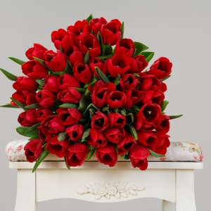 Tulip Bonanza Red