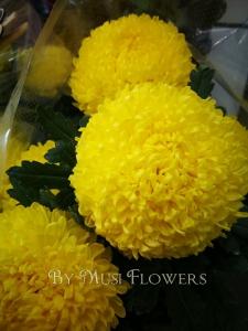 Big Chrysanthemums