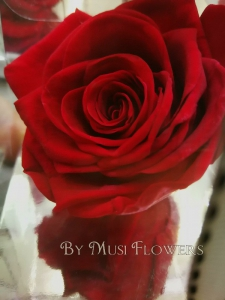 Single Everlasting Rose