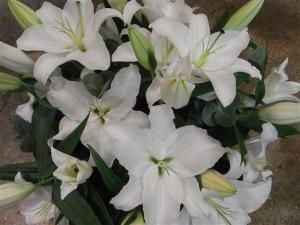 Oriental White Lily