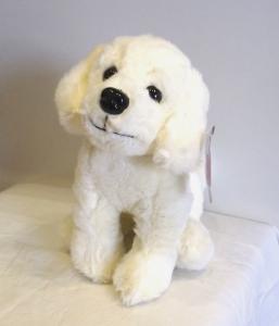 Labrador Teddy
