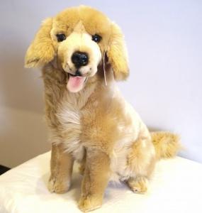Golden Retriever Teddy