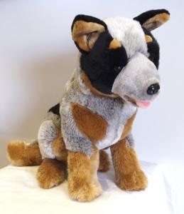 Blue Heeler Dog