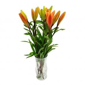 Asiatics Lily