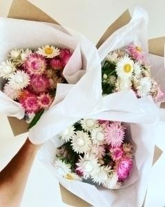 Pastel Dried Strawflowers