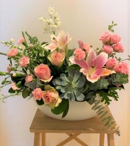 ANAYA With Succulent