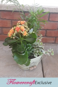 Sunset Kalanchoe Pail