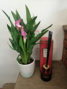Plant & Free Diffuser