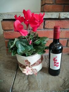 Cyclamen With Wine
