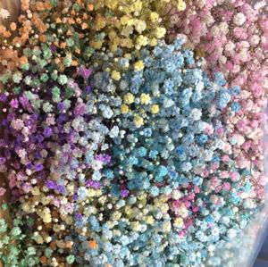 Rainbow Gypsophilia Gift In Aqua