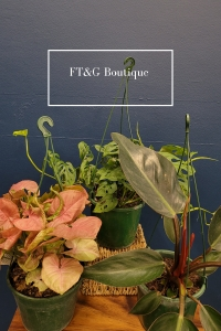 Assorted Hanging Plants
