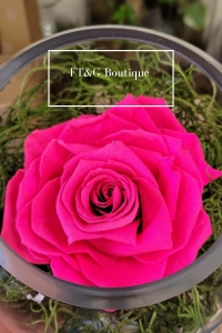Large Presered Pink Rose