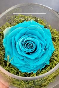Large Preseved Blue Rose
