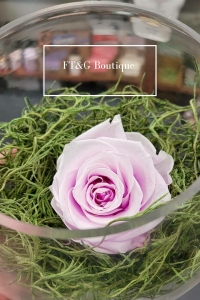 Small Preserved Pink Rose