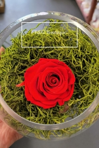 Small Preserved Red Rose