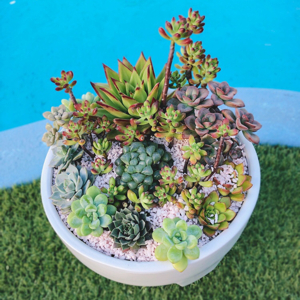 Succulent Surprise