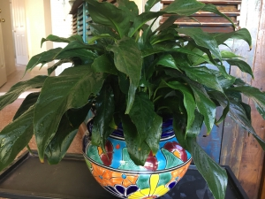 Mexican Hand Painted Pot