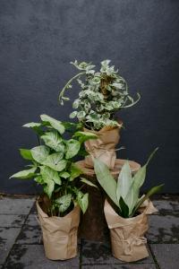 Florist Choice Plants