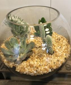 Planted Teranium
