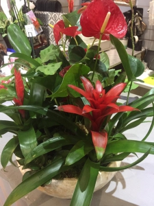 Florist Choice Planter