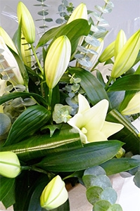 White Elegance Lillies