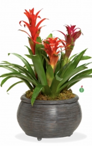 Bromeliad Collection