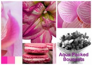Pink And White Aqua