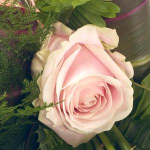 Simple Pink Rose Sheaf