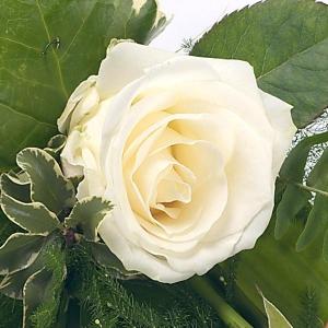 Simple White Rose Sheaf