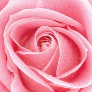Pink Rose Casket Spray