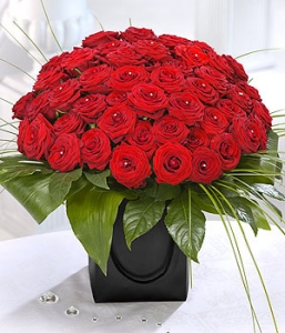 50 Stunning Red Roses