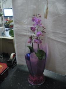 Orchid Festivity