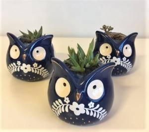 Succulent Owl Planter
