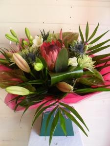 Protea Delight