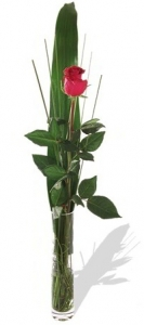 Single Rose With Vase